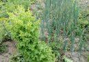 Minden napra 2 kert – A legszebbek közül Lemhény BOKOR KINGA