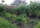 Minden napra 2 kert – A legszebbek közül Kézdivásárhelyről KOZMA ERZSÉBET