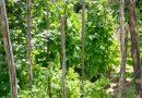 Minden napra 2 kert – A legszebbek közül Kézdivásárhelyről KOVÁCS JULIÁNNA