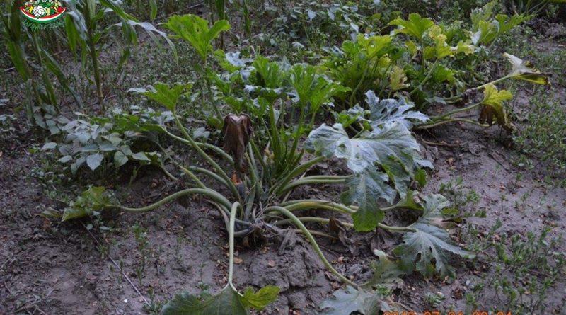 Minden napra 2 kert – A legszebbek közül Dunaszentgyörgy HORVÁTH ORSOLYA