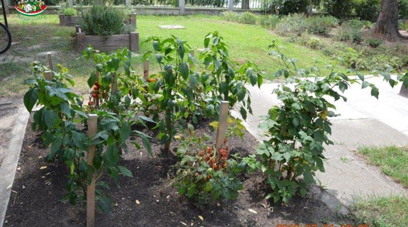 Minden napra 2 kert – A legszebbek közül Dunaszentgyörgy II. SZ. ÓVODA CSODAKERT ÓVODA ÉS MINI BÖLCSŐDE
