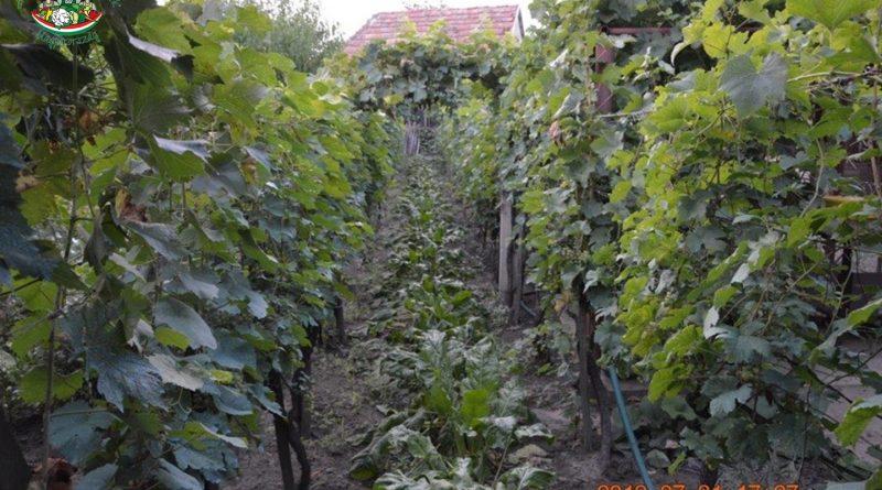 Minden napra 2 kert – A legszebbek közül Dunaszentgyörgy KOMÁROMI ANDRÁS
