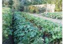 Minden napra 2 kert – A legszebbek közül Dunaszentgyörgy VÖRÖS LÁSZLÓ ÉS NEJE