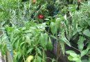 Minden napra 2 kert – A legszebbek közül Eger KEGYE ATTILA ÉS NEJE KEGYÉNÉ CSUTORÁS JUDIT