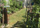 Minden napra 2 kert – A legszebbek közül Érd JÓZSEFNÉ ÉS VÁSZON JÓZSEF