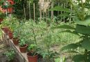 Minden napra 2 kert – A legszebbek közül Esztergom ERŐS MIKLÓS ÉS NEJE