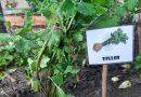Minden napra 2 kert – A legszebbek közül ESZTERGOMI ZÖLD ÓVODA