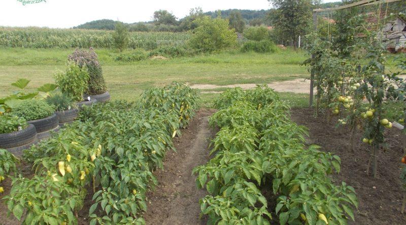 Minden napra 2 kert – A legszebbek közül Gutorfölde KOVÁCS PÉTER ÉS CSALÁDJA,