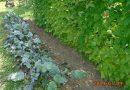 Minden napra 2 kert – A legszebbek közül Kisoroszi APFEL JÓZSEF
