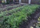 Minden napra 2 kert – A legszebbek közül Kistokaj KOVÁCSNÉ KISS ALIZ