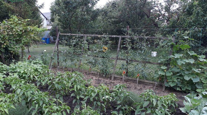 Minden napra 2 kert – A legszebbek közül Kistokaj PÁNCZÉL GÉZA ÉS PÁNCZÉL GÉZÁNÉ