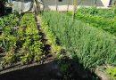 Minden napra 2 kert – A legszebbek közül Kocsér FARAGÓ JÁNOSNÉ ÉS FARAGÓ JÁNOS