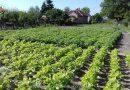 Minden napra 2 kert – A legszebbek közül Kocsér HABON IMRÉNÉ