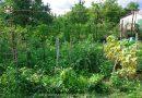 Minden napra 2 kert – A legszebbek közül Kóspallag KARÁCSONY ISTVÁNNÉ