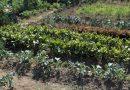 Minden napra 2 kert – A legszebbek közül Kóspallag SCHOTTNER JÁNOSNÉ ÉS SCHOTTNER BARNABÁS