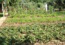 Minden napra 2 kert – A legszebbek közül Martfű ERDÉLYI ANDRÁS ÉS FELESÉGE ERDÉLYI ANDRÁSNÉ (NÉMETH ÁGNES)