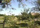 Minden napra 2 kert – A legszebbek közül Kismarja OROSZLÁN PÉTER,OROSZLÁN ALIZ ,OROSZLÁN DÁVID, OROSZLÁN PÉTERNÉ