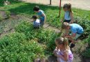 Minden napra 2 kert – A legszebbek közül Kismarja POCSAJ KISMARJA ÓVODA/TARKA-BARKA ÓVODA