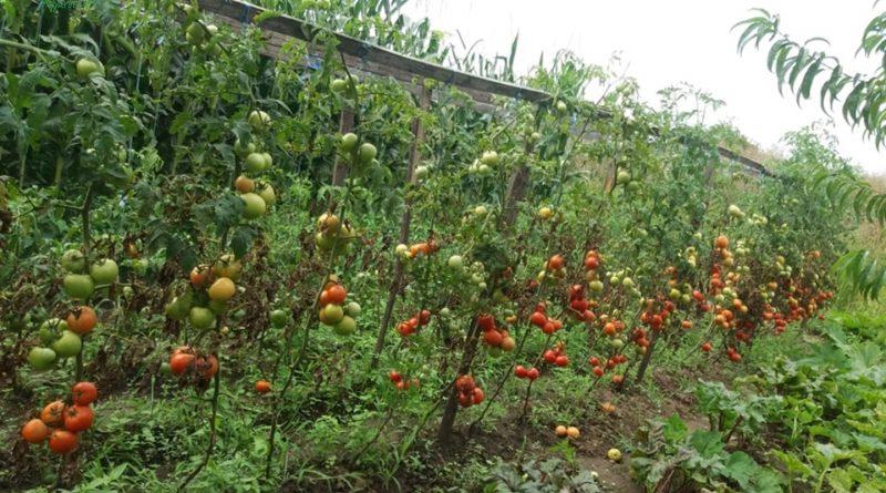 Minden napra 2 kert – A legszebbek közül Kismarja PÁL SÁNDOR és PÁL MAGDOLNA
