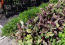 Minden napra 2 kert – A legszebbek közül Kistokaj  DR. BALOGH ANDRÁSNÉ