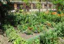 Minden napra 2 kert – A legszebbek közül Szeged  MAKKOSHÁZI KÖZÖSSÉGI KERT, akik Közösségi kategóriában kaptak országos jelölést,