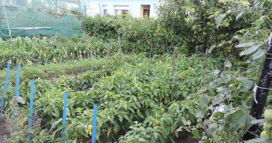 Minden napra 2 kert – A legszebbek közül Szentistván TÓTH IMRE, aki Mini kategóriában kapott országos jelölést,