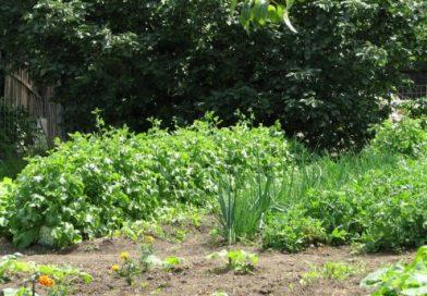 Ments meg egy kertet! – országszerte lehet pályázni