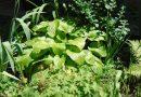 ÍGY CSINÁLOM ÉN! Óvoda kert Bicske Városi Óvoda Kakas Tagóvodája
