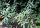 ÍGY CSINÁLOM ÉN! Óvoda kert Budapest XI. kerület Sasadi Óvoda Újbudai Tesz-Vesz Óvoda Telephely