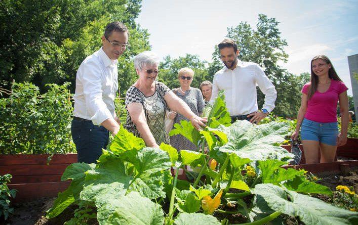 Debrecen – A legszebb konyhakertek versenyén indult a Vénkerti Közösségi Kert