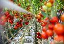 Orosháza – Kié lesz a legszebb konyhakert Orosházán?