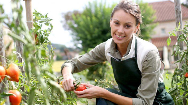 Törökszentmiklós – Ismét keresik a legszebb konyhakertet Törökszentmiklóson