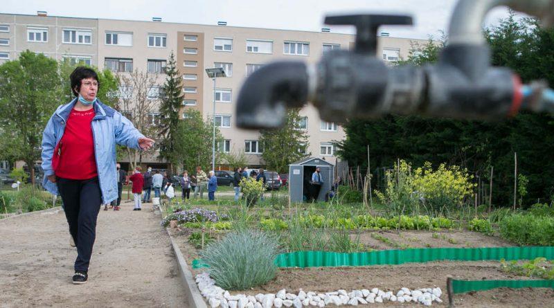 Kecskemét – Közösség is terem a kecskeméti kertekben