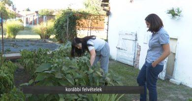 Kecskemét – Idén is megmérettetnek Magyarország legszebb konyhakertjei