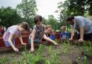 Debrecen – Születésnapot ünnepelt a Vénkerti Közösségi Kert