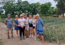 Kiskunfélegyháza – Félegyháza legszebb konyhakertjei – Ifjúságközpontú kertészkedés a Mezgé-ben